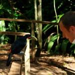 Park Ptaków - Brazylia 2009 - fot. Gerardo