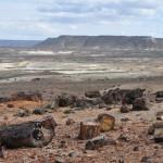 Park Narodowy Monumento Natural Bosques Petrificados dzien2 (18)