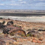 Park Narodowy Monumento Natural Bosques Petrificados dzien2 (22)